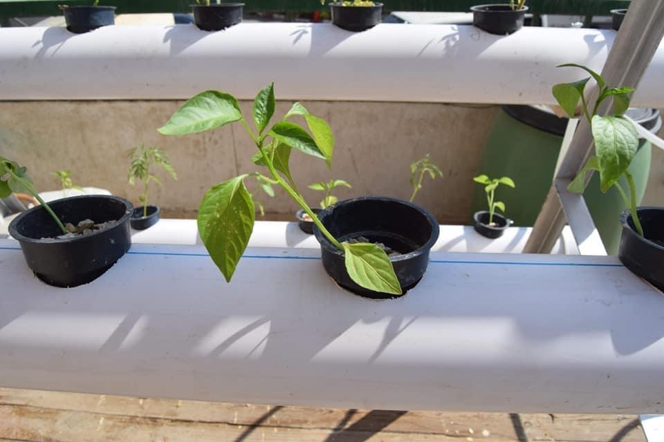 جامعة سوهاج تفتتح نموذج لزراعة الأسطح بتكلفة 5000 جنيه