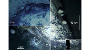دراسة جديدة تكشف وجود مخلوقات بحرية تحت القارة القطبية الجنوبية