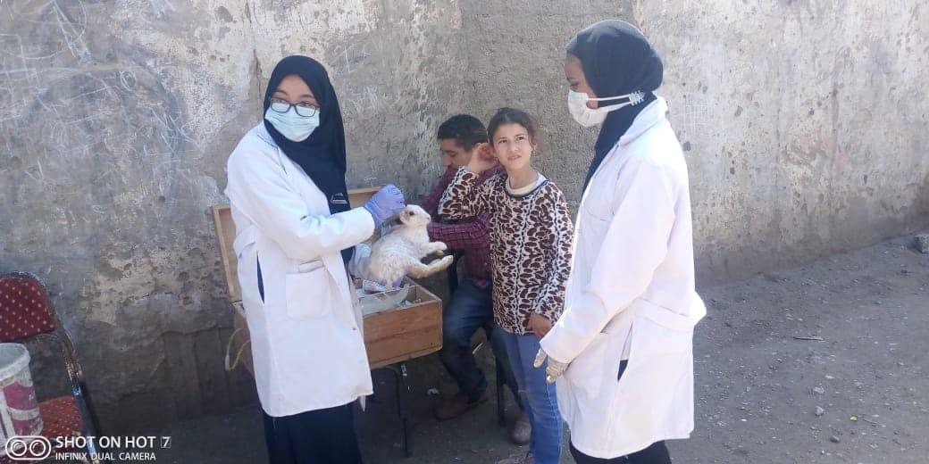 جامعة سوهاج تنظم قافلتها البيطرية المجانية لقرية أولاد إسماعيل بالمراغة