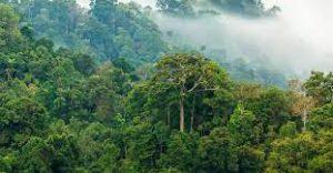 دراسة علمية تكشف أخبارًا صادمة عن رئة الأرض